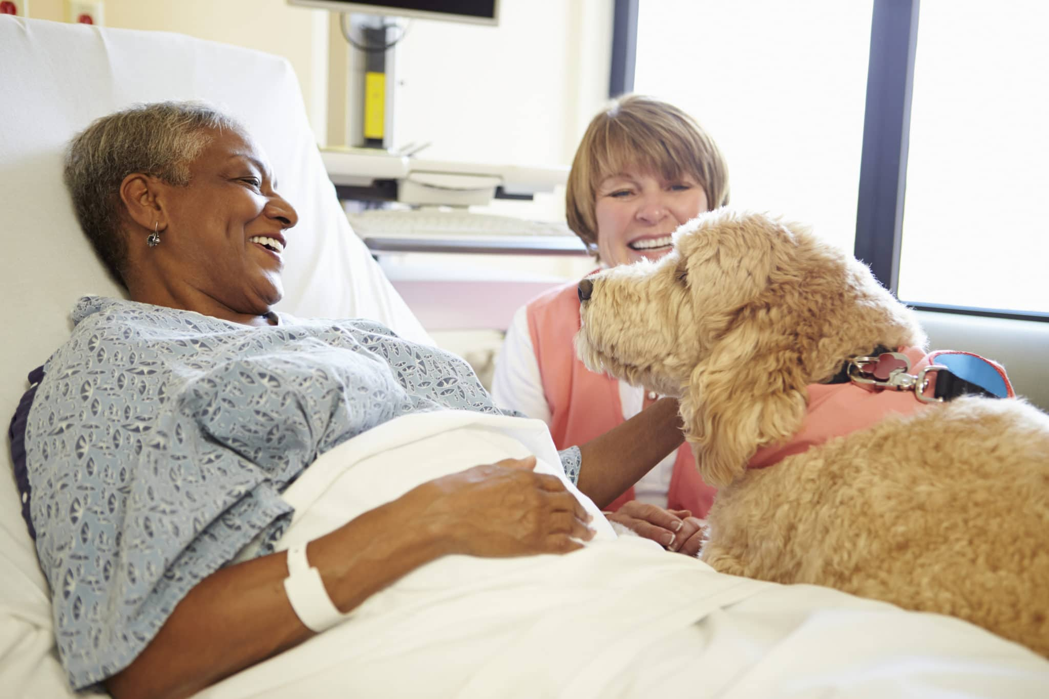 pet-therapy-south-florida